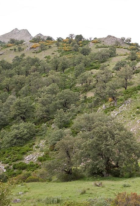 zona-de-fuentes-de-peñacorada